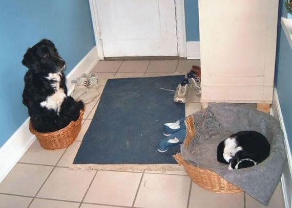 01-bully-cats