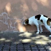 Perfectly-Timed Photos Of Dogs