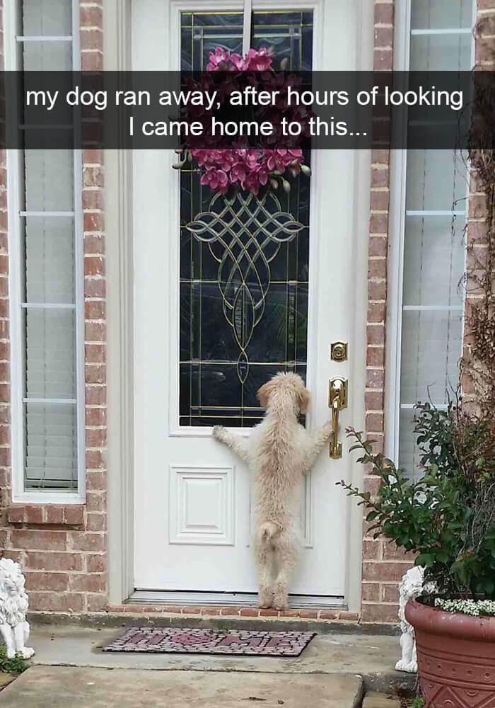 01-funny-dog-snapchats