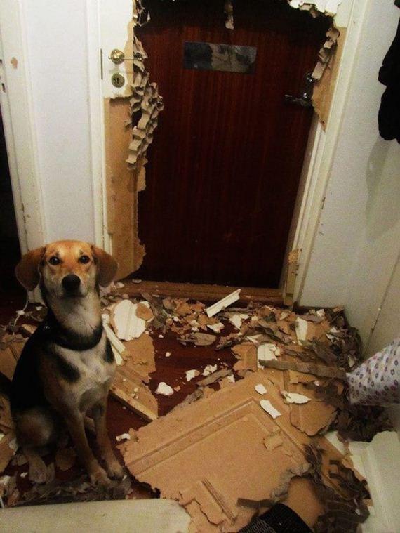 01-misbehaving-dogs