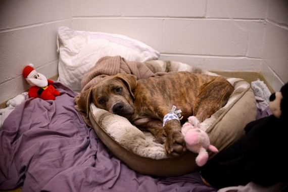 Penn Vet Program Saves 100th Shelter Dog in Need