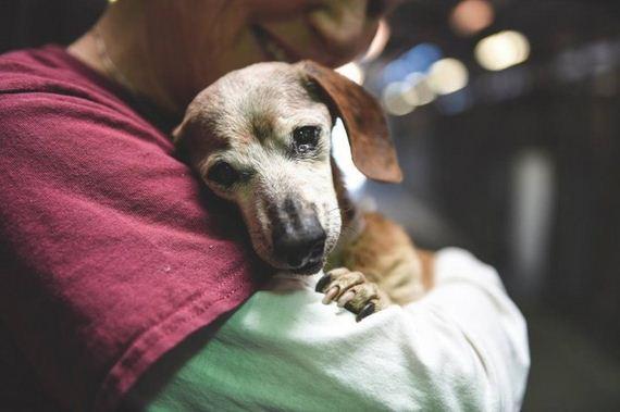02-blind-senior-dog