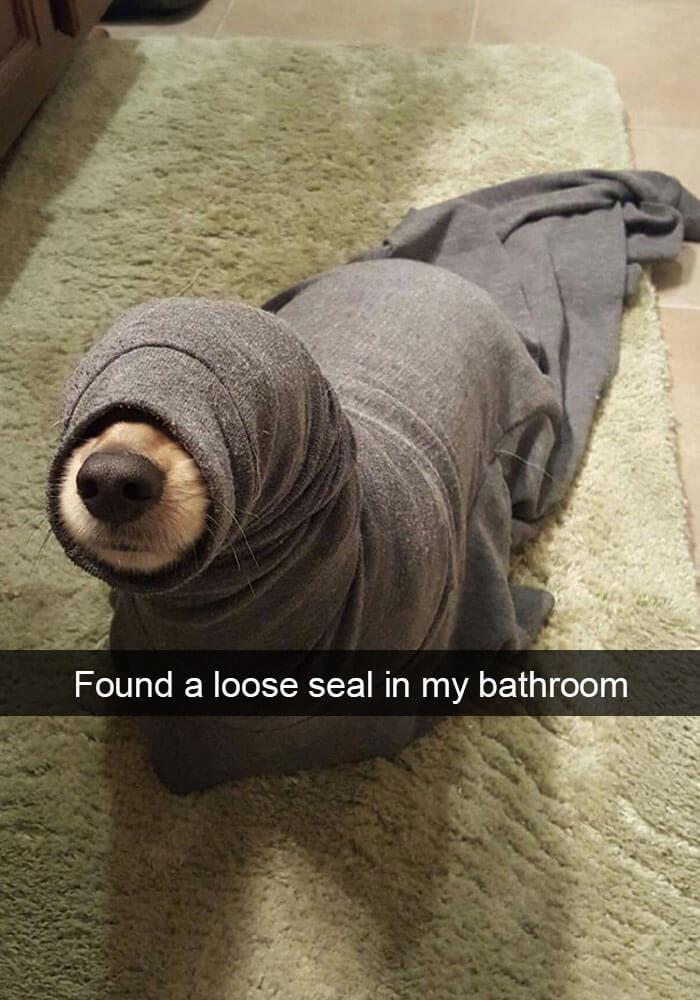 02-funny-dog-snapchats