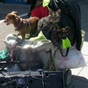 Pets of the Homeless Share Special Wish for the Holidays