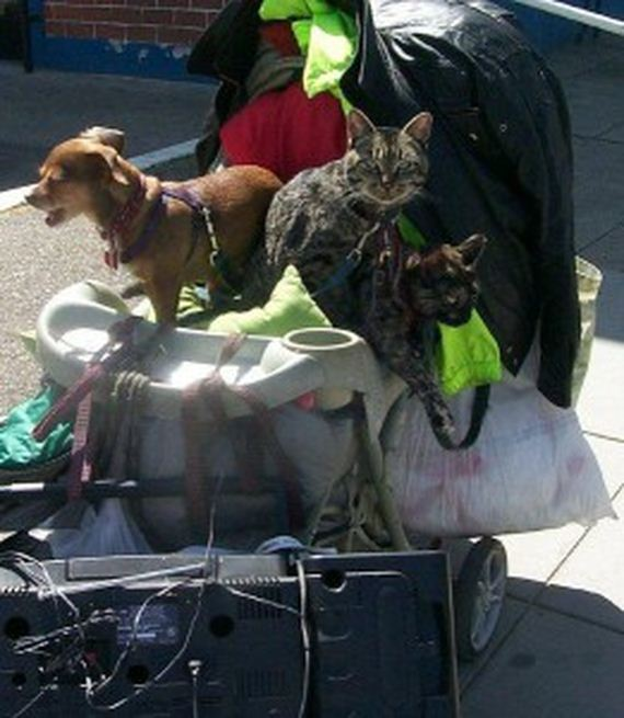 02-pets-homeless