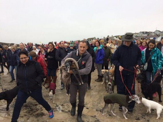 Hundreds Of People Join Beloved Dog For Last Walk On His Favorite Beach