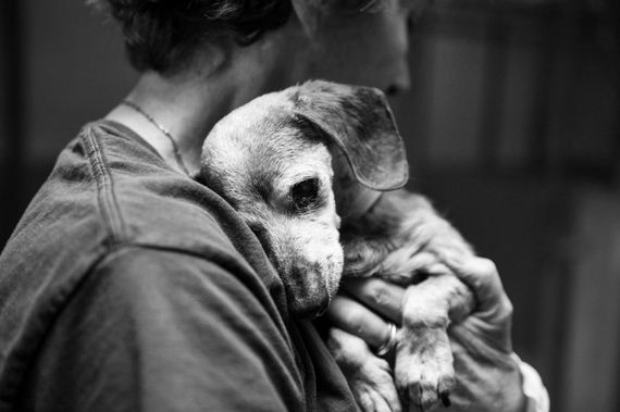 03-blind-senior-dog