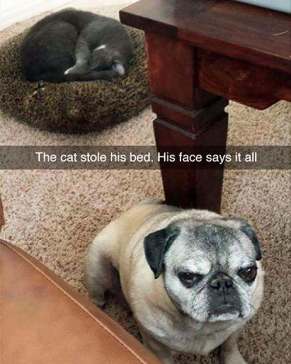 03-bully-cats