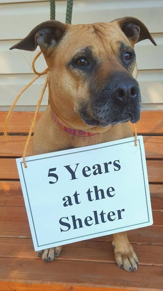 03-dog-grows-old-shelter