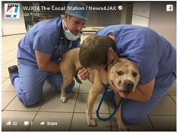 Police Officer Reunited With His Dog Who Was Shot & Fled During Home Robbery