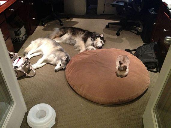 04-bully-cats