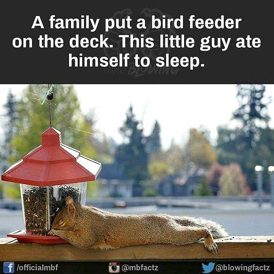 04-food-coma-pets
