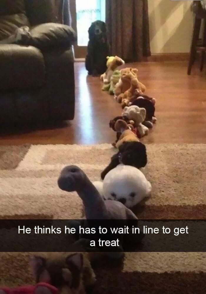 04-funny-dog-snapchats