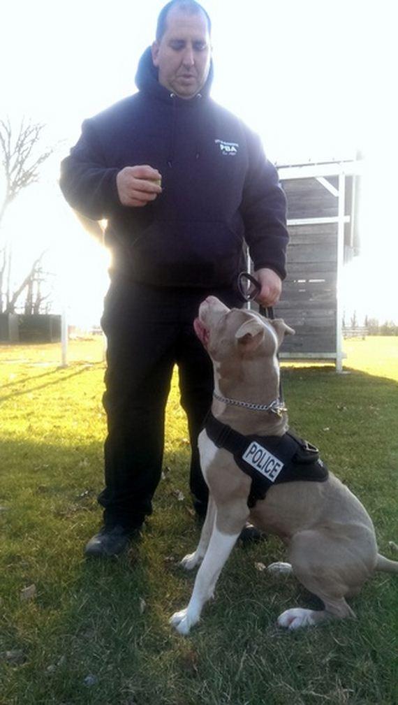 04-rescue-pup