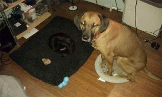 05-bully-cats