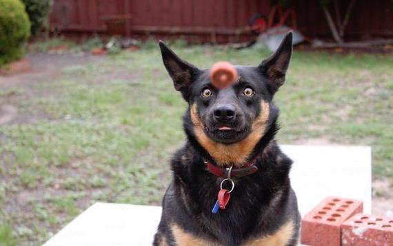 05-dog
