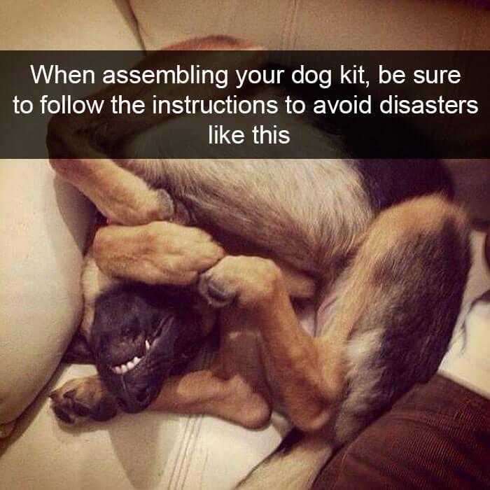 05-funny-dog-snapchats