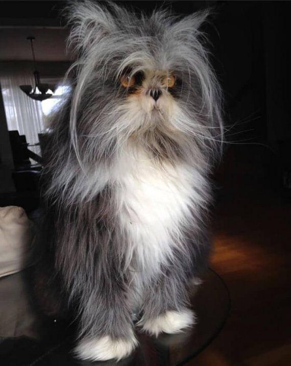 06-atchoum-cat-or-dog