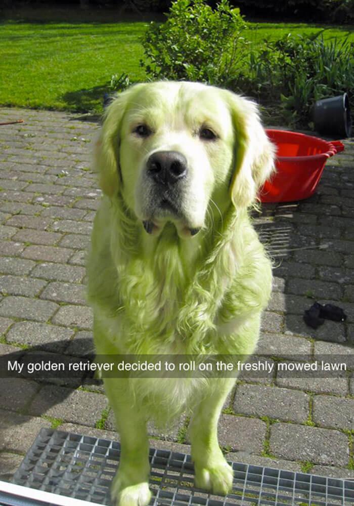 06-funny-dog-snapchats