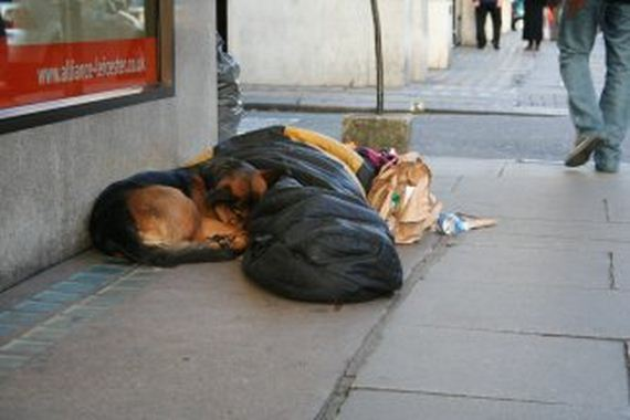 06-pets-homeless