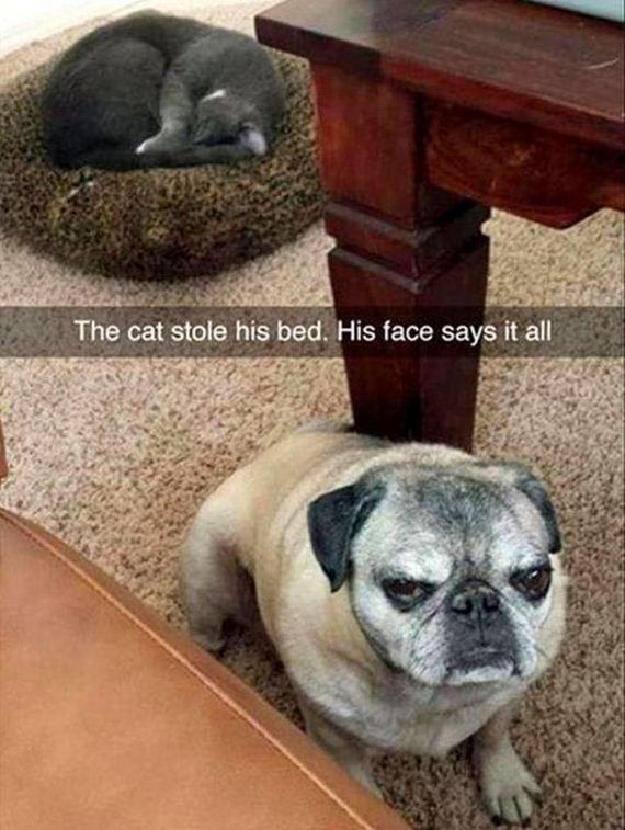 06-snapchat-pet-photos