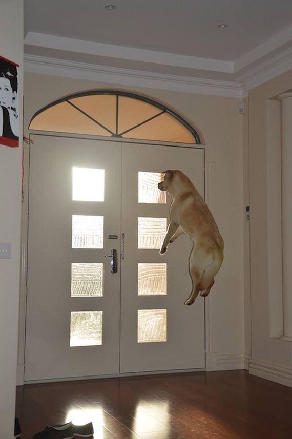 07-dog