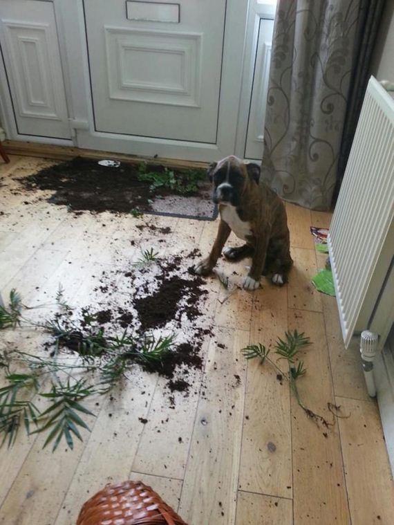 07-misbehaving-dogs