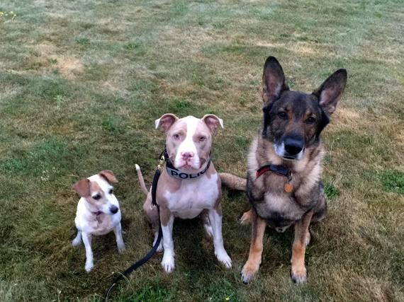 07-rescue-pup