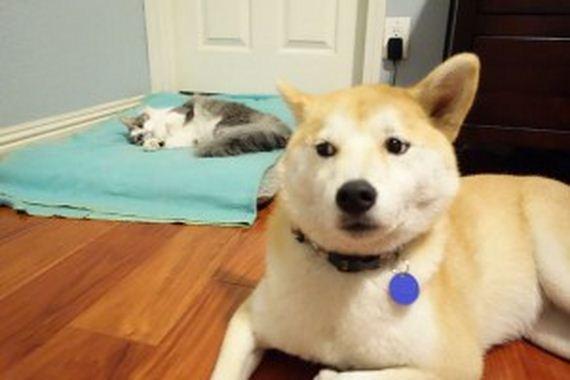 08-bully-cats