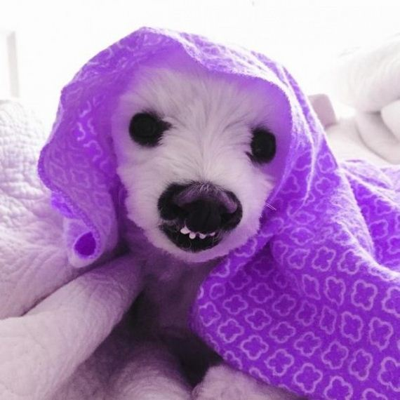 08-dogs-smile
