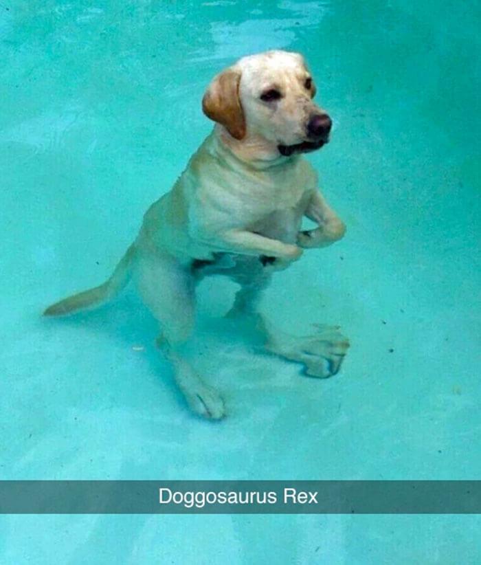 08-funny-dog-snapchats