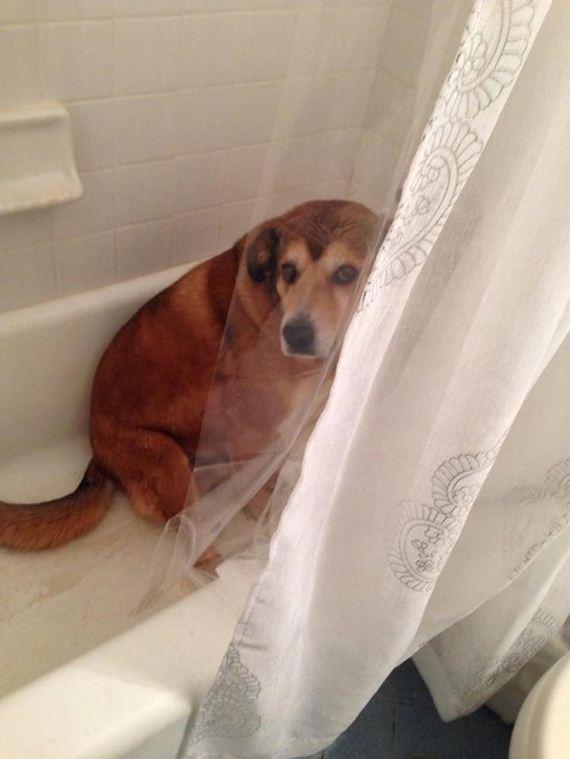 08-misbehaving-dogs