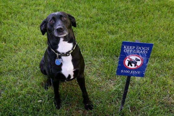 09-misbehaving-dogs