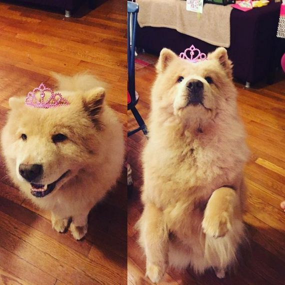 09-senior-dog-princess