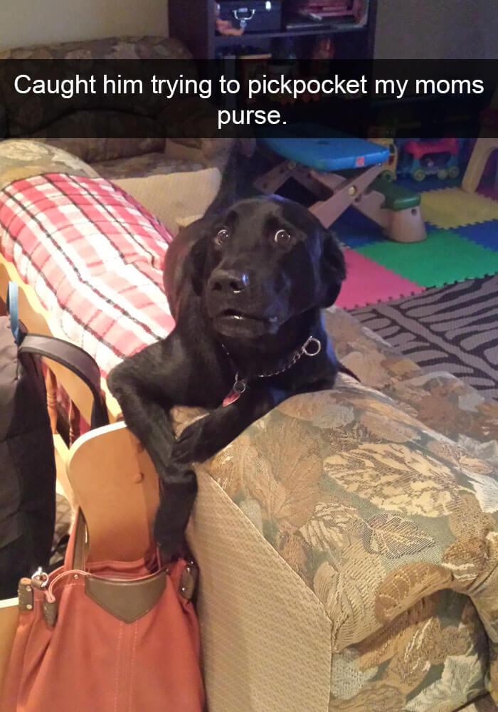 10-funny-dog-snapchats