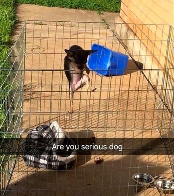 10-snapchat-pet-photos