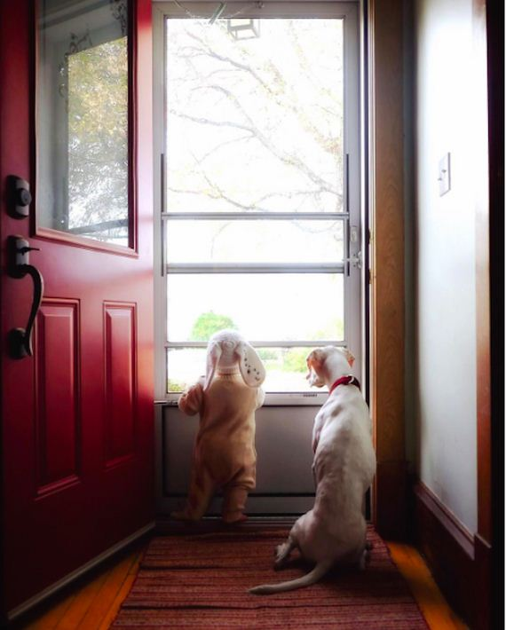 10-tiny-human-dogs