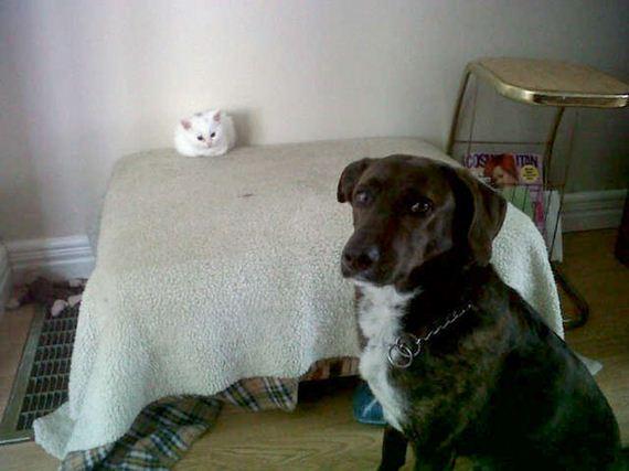 11-bully-cats