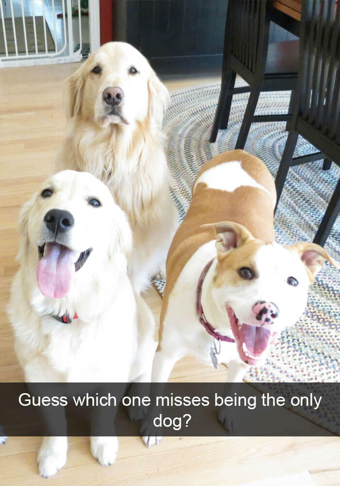 12-funny-dog-snapchats