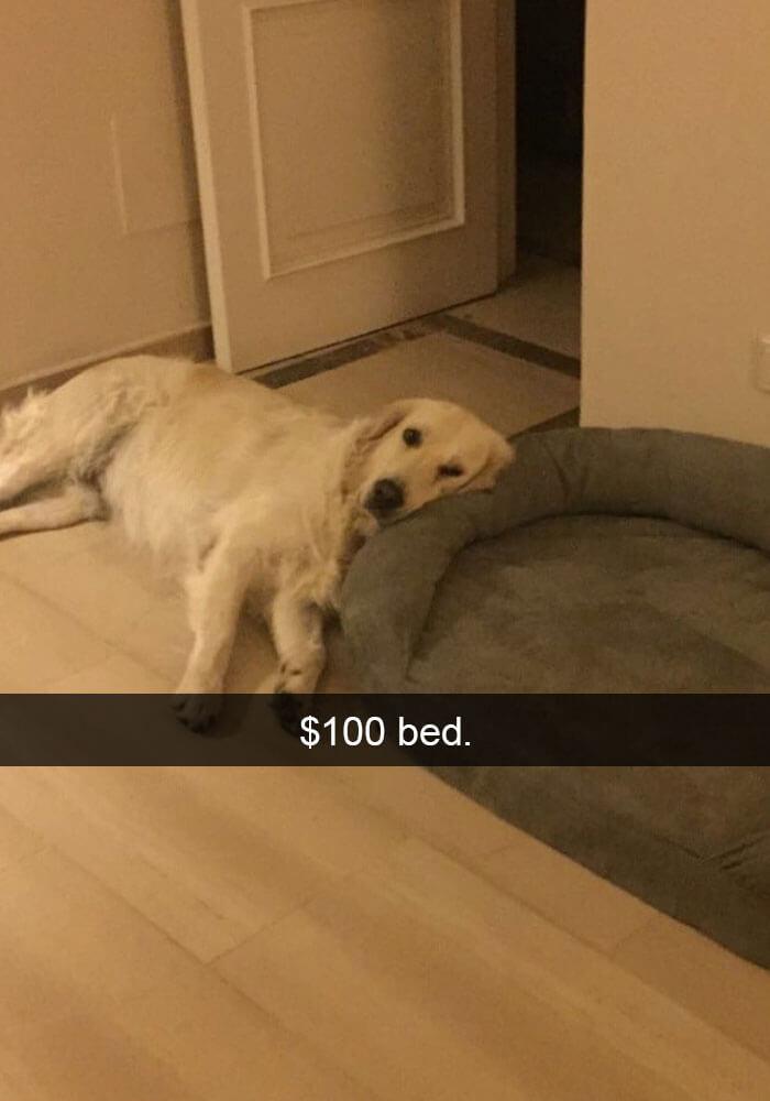 13-funny-dog-snapchats