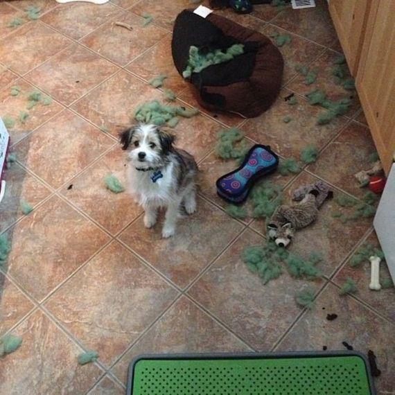 13-misbehaving-dogs