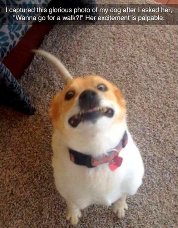 13-snapchat-pet-photos