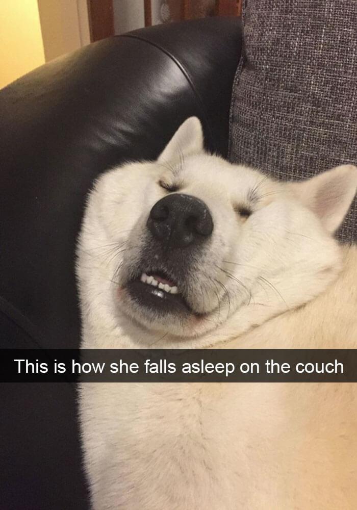 14-funny-dog-snapchats