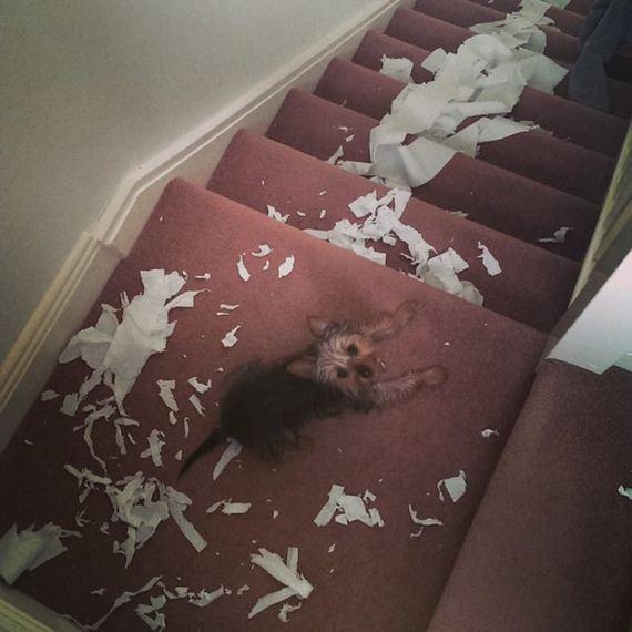 14-misbehaving-dogs