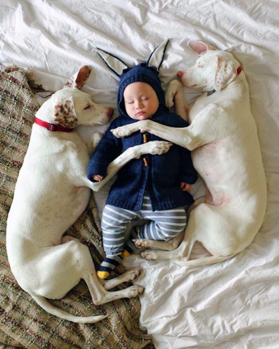 14-tiny-human-dogs