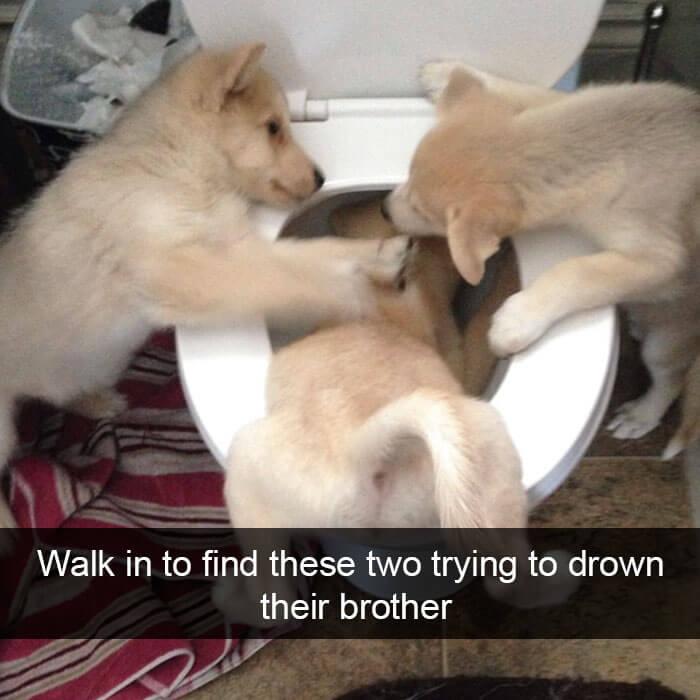 15-funny-dog-snapchats