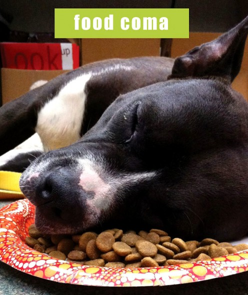 16-food-coma-pets