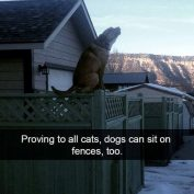 Super Funny Pet Photos to Get You Laughing Again