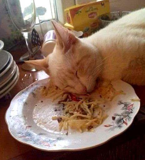 18-food-coma-pets