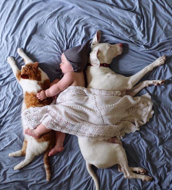19-tiny-human-dogs